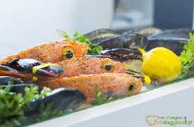 Pesce Crudo Ristorante Piazza Palmieri Monopoli foto 13