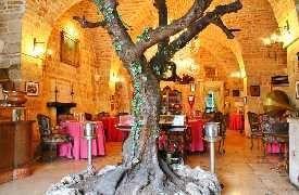 Albero in sala Ristorante Il Poeta Contadino Alberobello Bari